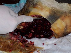Hoof_Resection_1_25.336150733_std